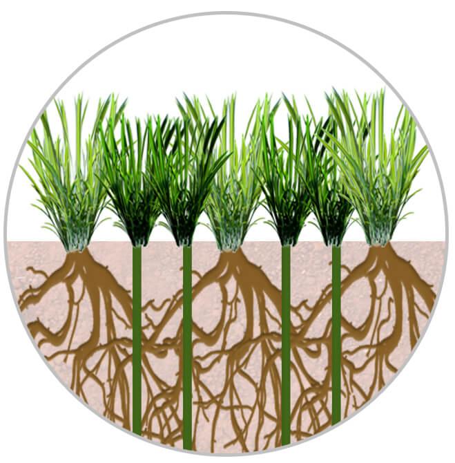 Imagem da diferença entre a grama natural e sintética