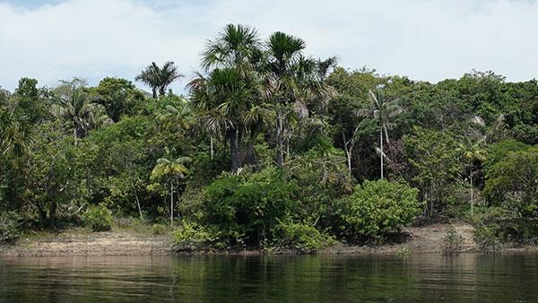Foto da margem do Rio. A parte de baixo da foto mostra água, a parte de cima mostra uma rica vegetação verde e o céu com algumas nuvens.