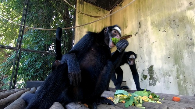 'Globo Repórter' mostra o processo de transformação de zoológicos em bioparques