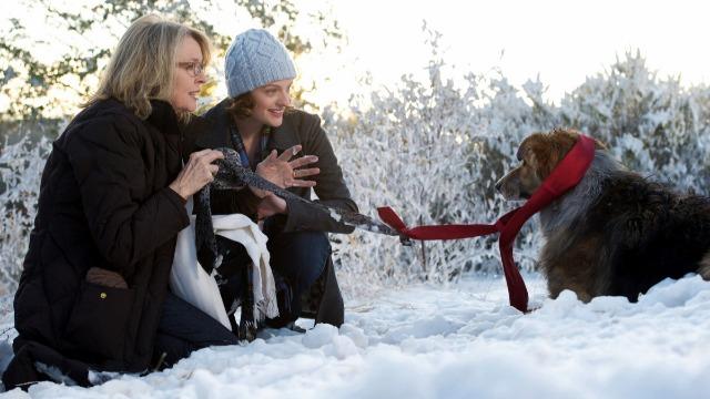 Beth e sua filha Grace salvam um cão perdido no acostamento de uma estrada. Joseph, marido de Beth, odeia o animal, agora a principal companhia da esposa. Um casamento é realizado na casa de férias da família e Joseph acaba perdendo o cachorro. Beth se recusa a voltar sem ele e os convidados remanescentes são obrigados a se empenhar na busca.