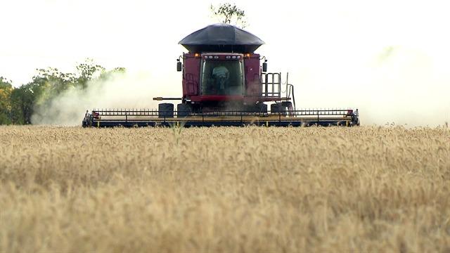 Da região Sul ao Cerrado: 'Globo Rural' mostra cultivo de trigo