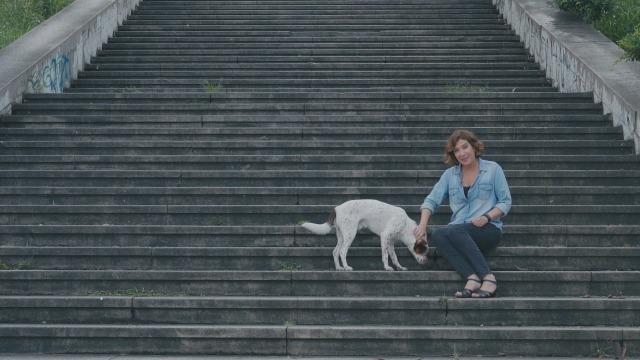 Nova série acompanha a saga de animais abandonados por uma segunda chance