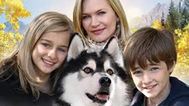 Após um acidente de avião, os irmãos Zach e Hannah precisarão lutar para sobreviver num ambiente selvagem e assustador. Protegidos pelo seu cachorro, um husky chamado Chinook, eles enfrentarão grandes desafios. Enquanto isso, os pais da dupla irão deixar as diferenças de lado para começar uma busca desesperada pelos seus filhos.